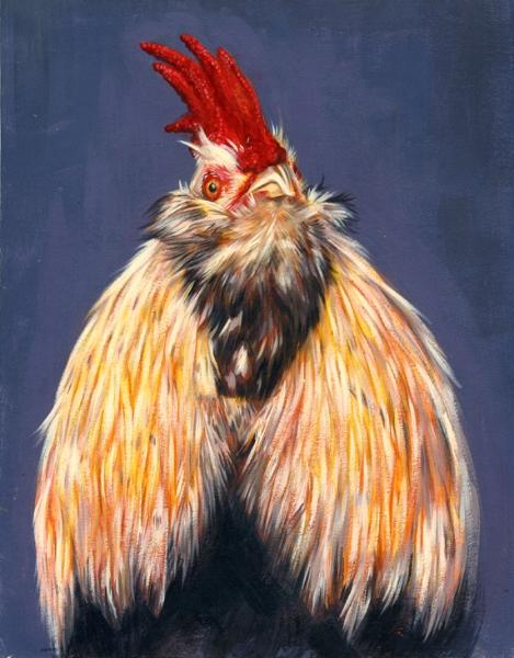 Faverolles-Salmon Chicken
