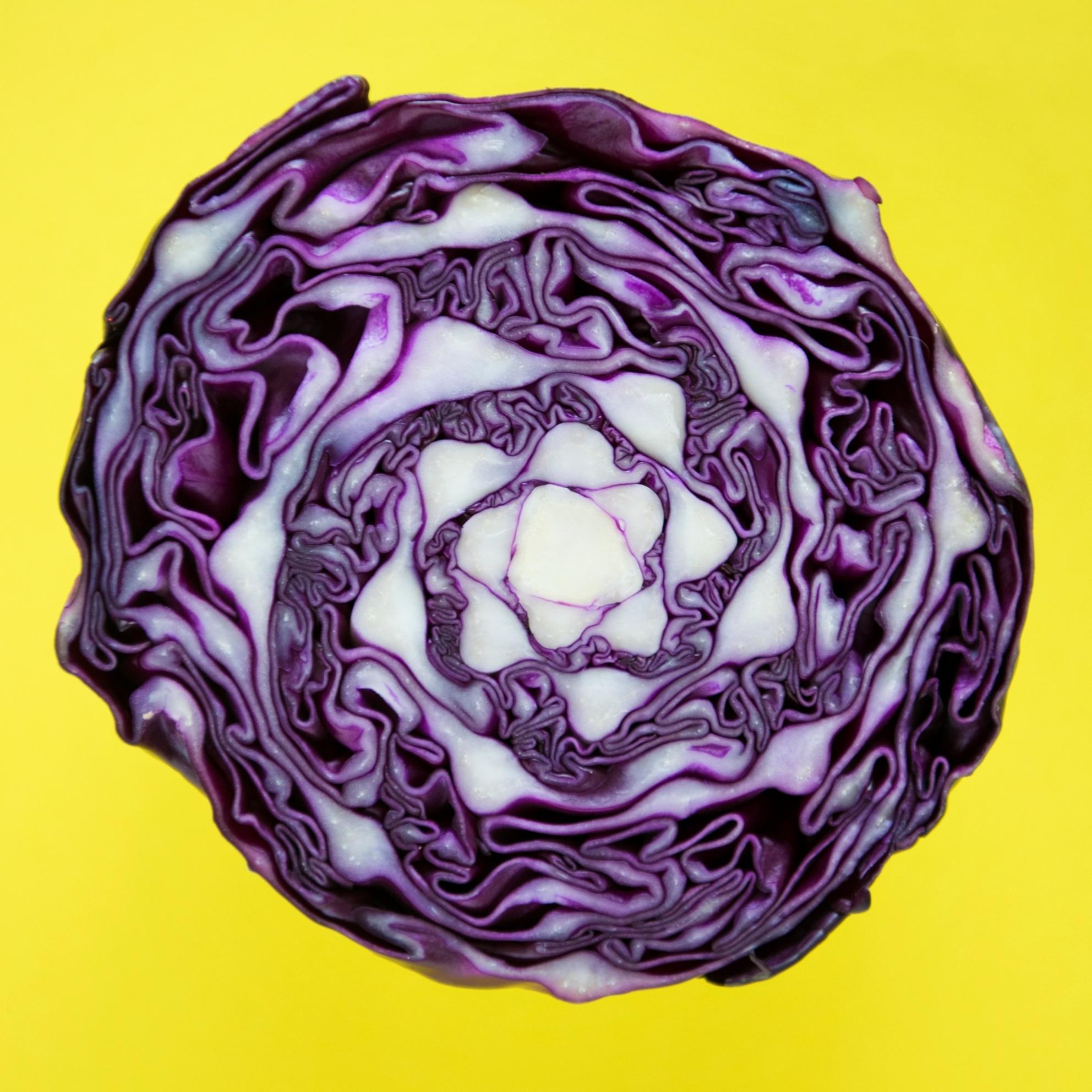 One Red Cabbage: Three Delicious, Nutritious Dishes!
