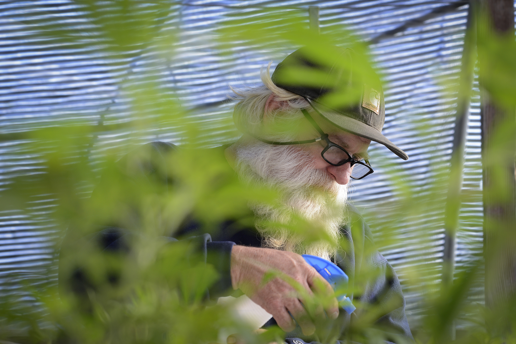 Tom Lauerman, a Vancouver medical marijuana farmer, sprays water over marijuana seeds on his farm on February 12, 2015. Lauerman, who was arrested for growing marijuana at his collective in California in 1990, is now working with the federal government to help establish the first ever safety standards for marijuana workers in the U.S. (Ariane Kunze/The Columbian)