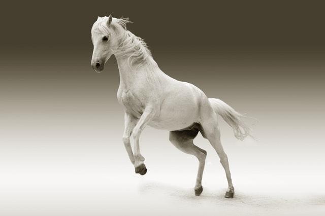 mare-animal-nature-ride-45164.jpeg