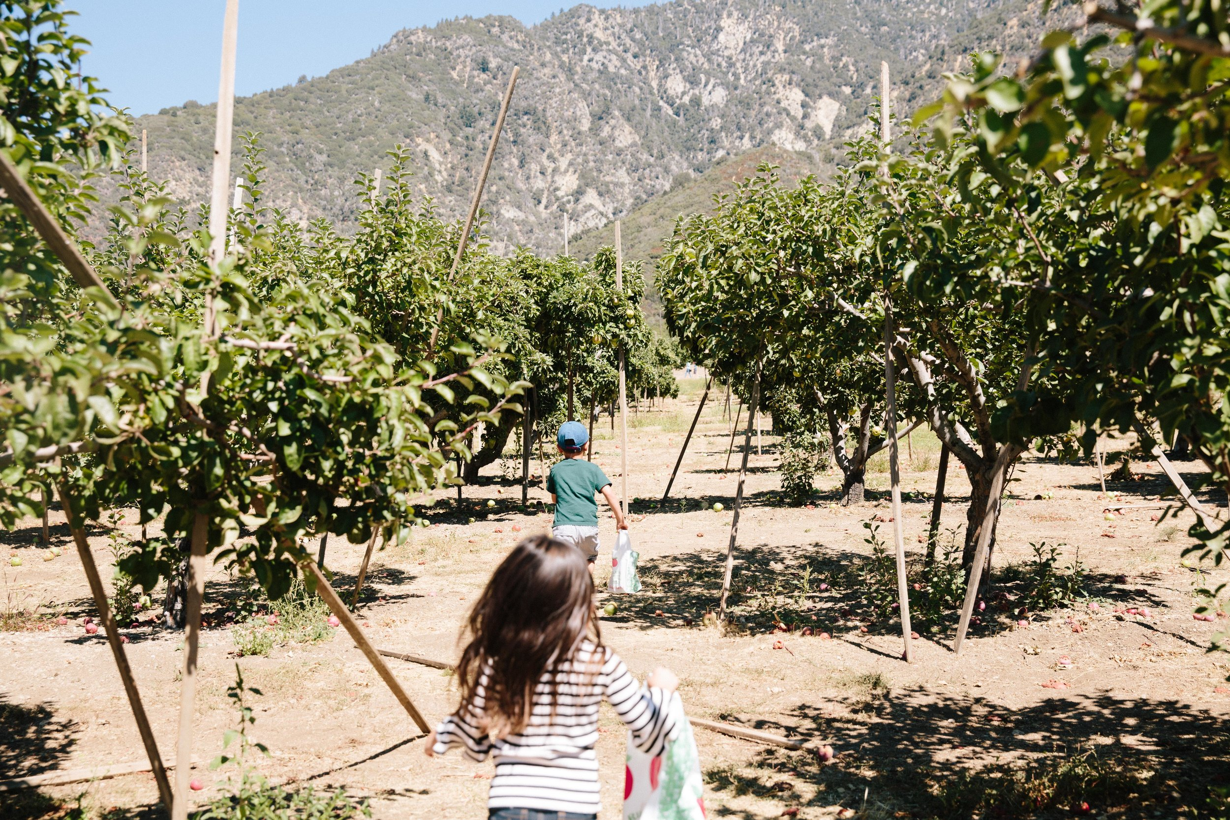 Apple Picking Oak Glen-1.JPG