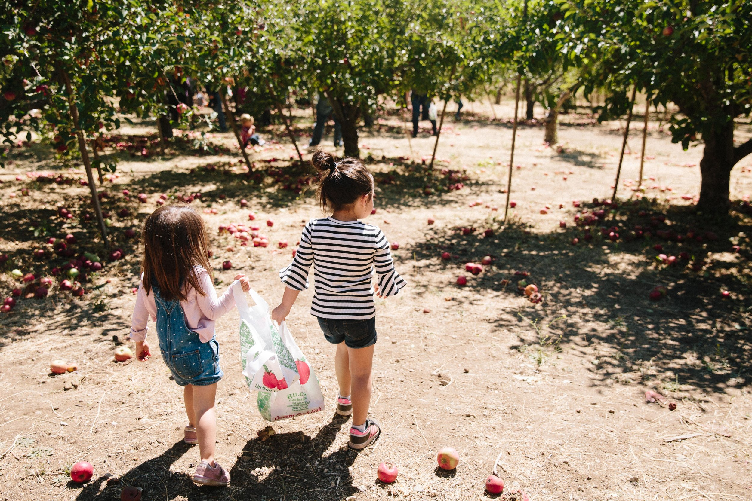 Apple Picking Oak Glen-8.JPG