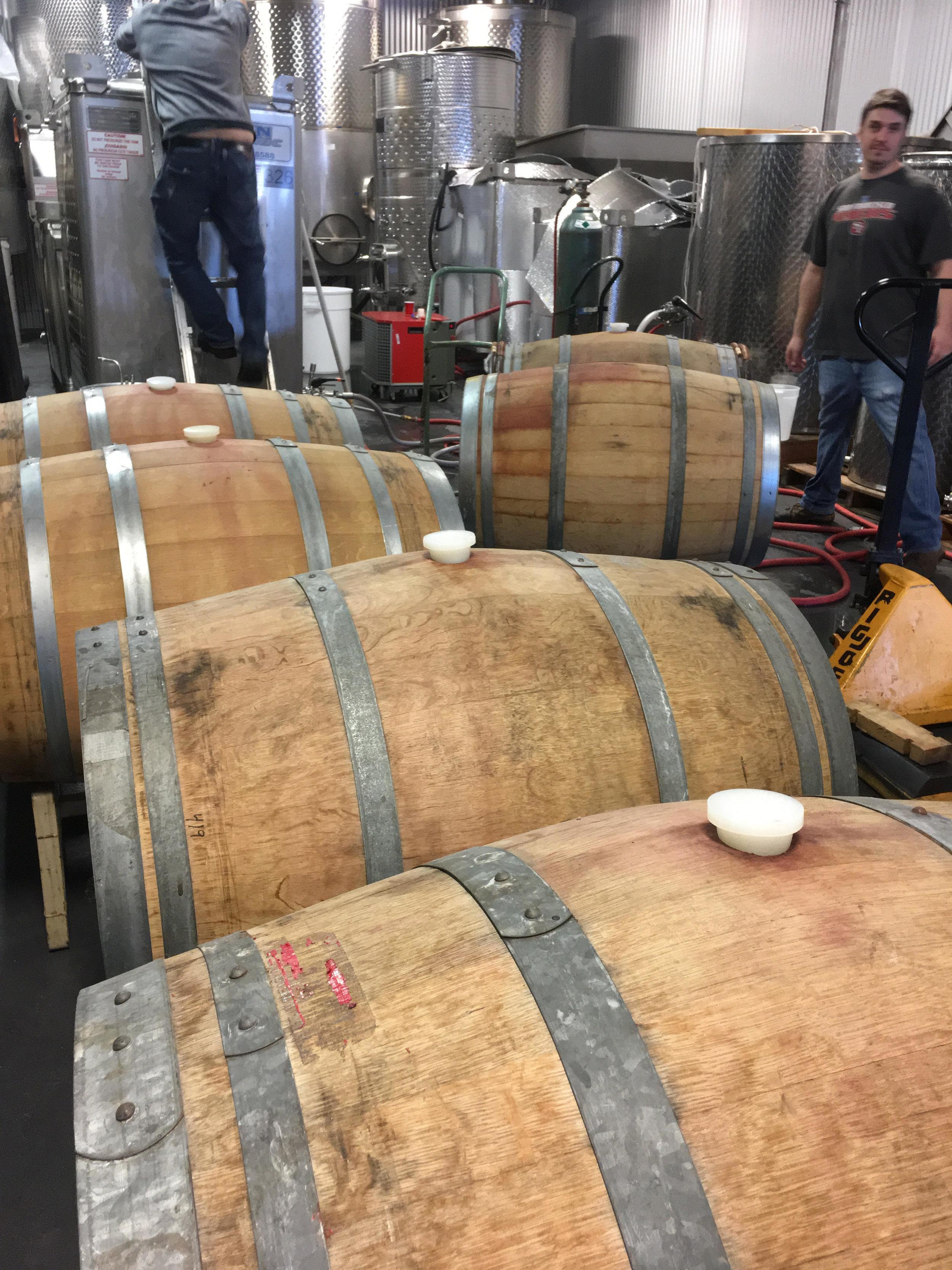 Chardonnay Barrels.jpg