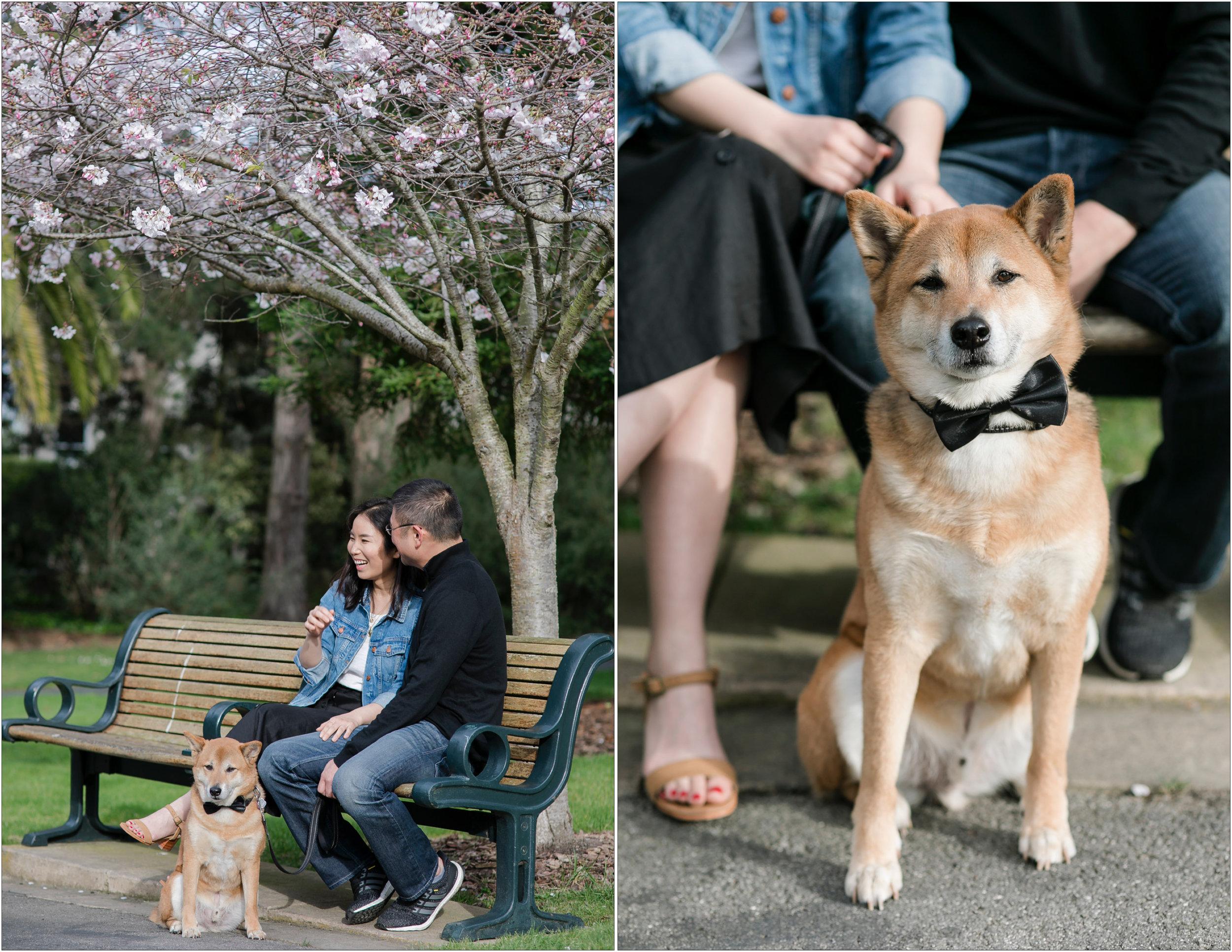 San Francisco Surprise Proposal - MIchelle Chang Photography