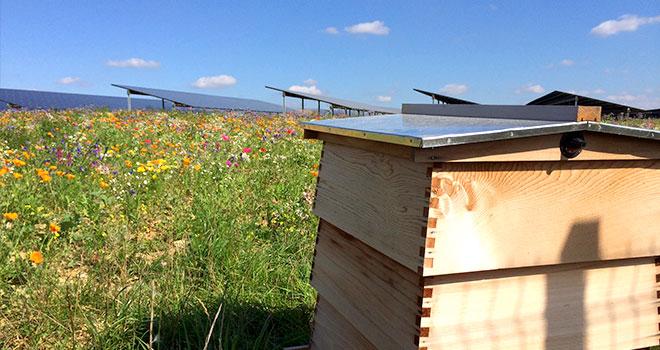 solar-farm-beehive.jpg