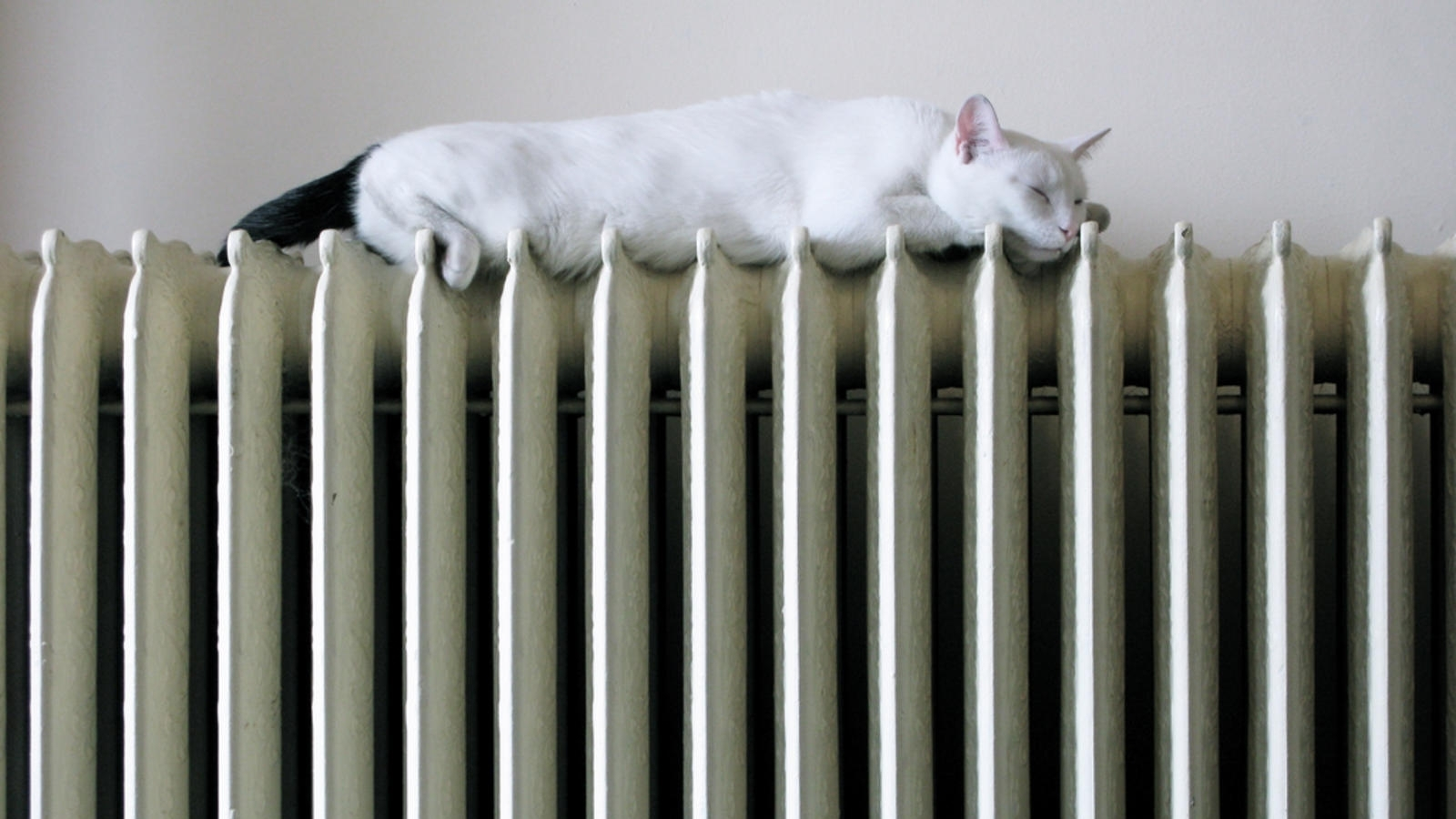 dog-heating-dan-goodwin-by-sa.jpg