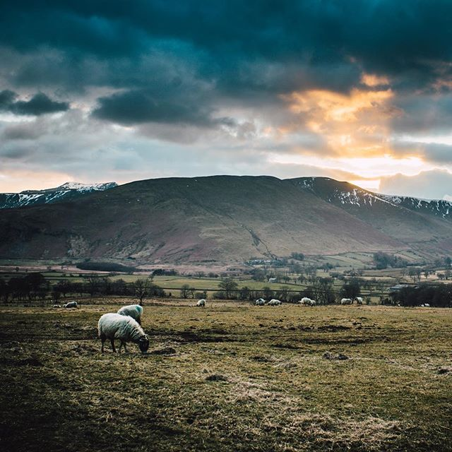 Quick trip upto Cumbria to shoot with @gusgreensmith 🐑🏔 . . @sonyalpha . .  #lakedistrict #cumbria #sonyalpha #sonya7sii #zeegermans