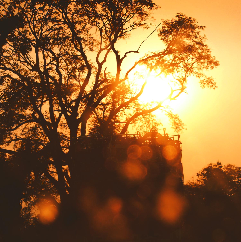 indian sunset bokeh warm orange light exotic trees travel