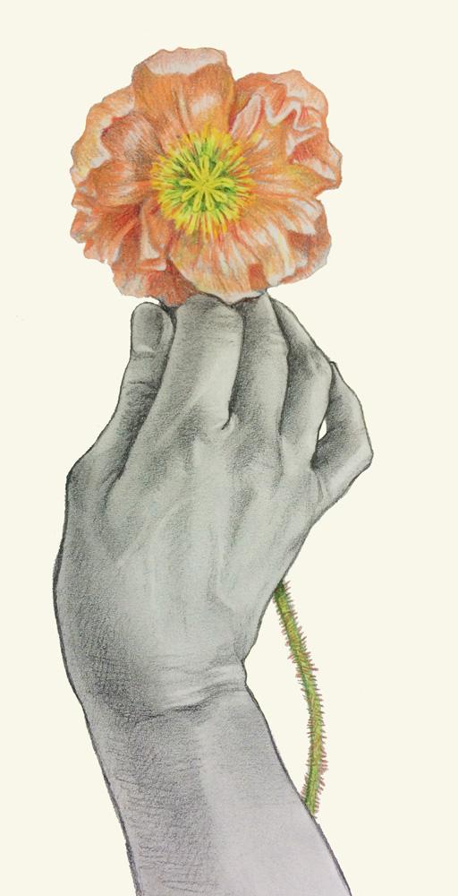 holding-poppy_plain.jpg
