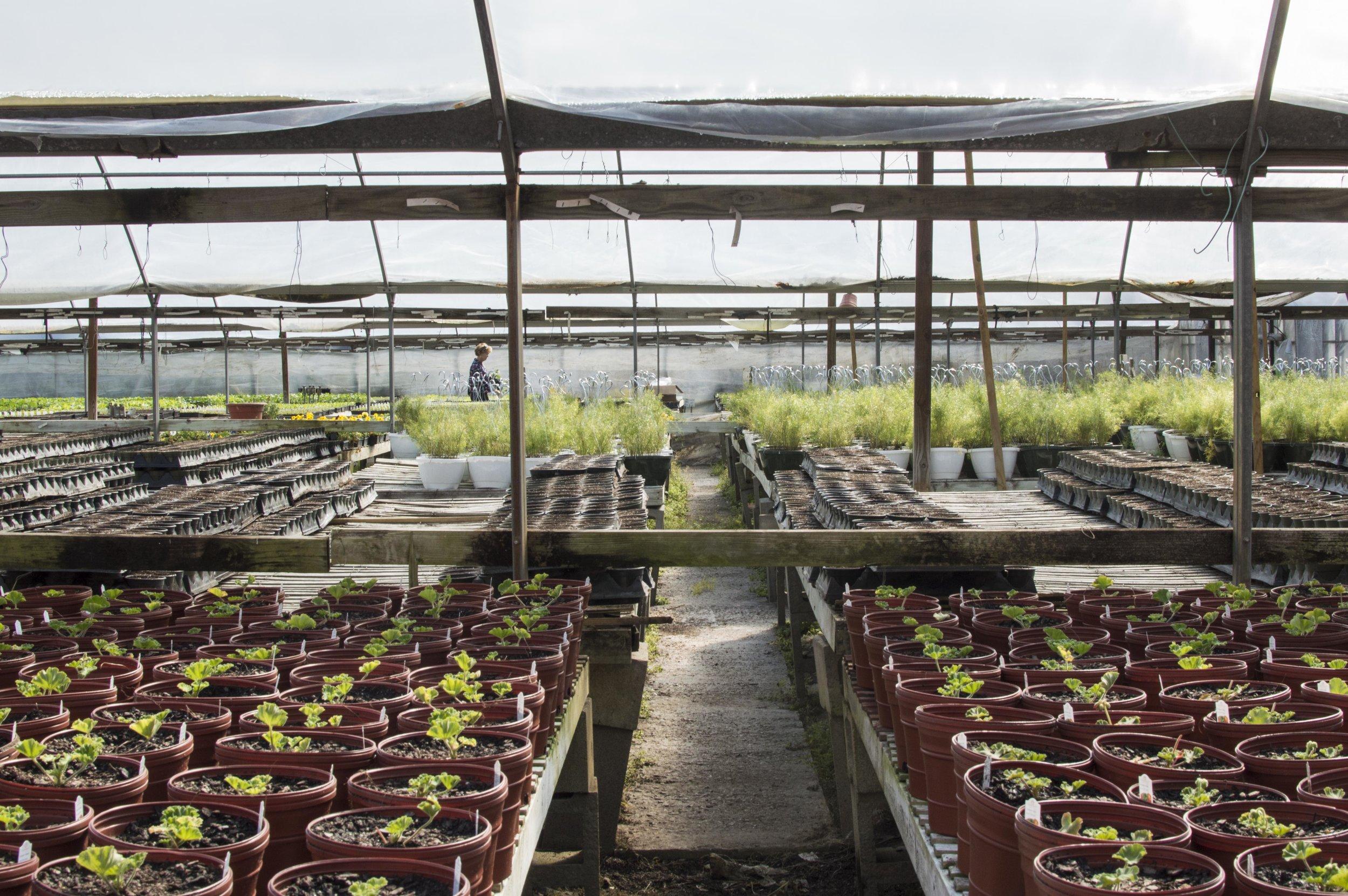 Plants+andy-9.jpg