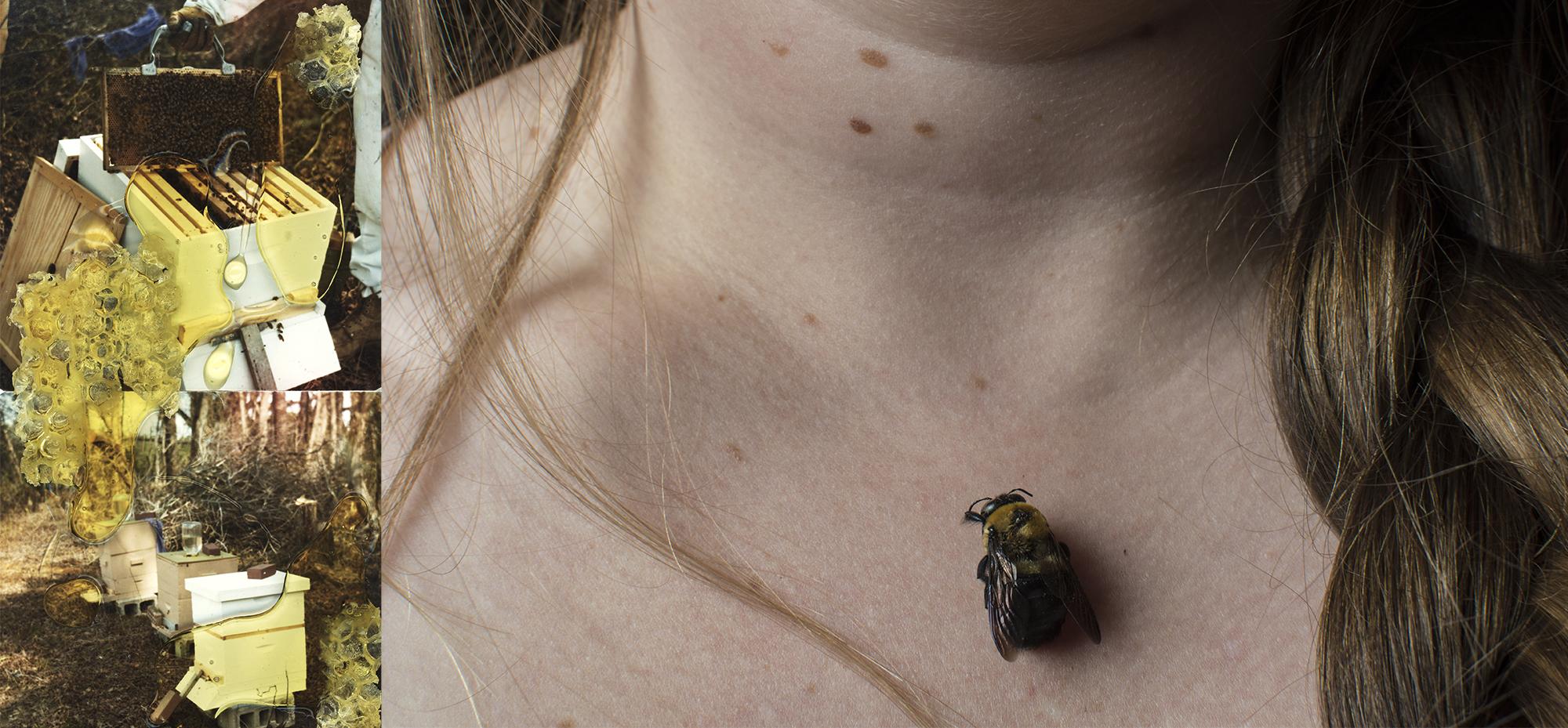 beeswcomb.jpg