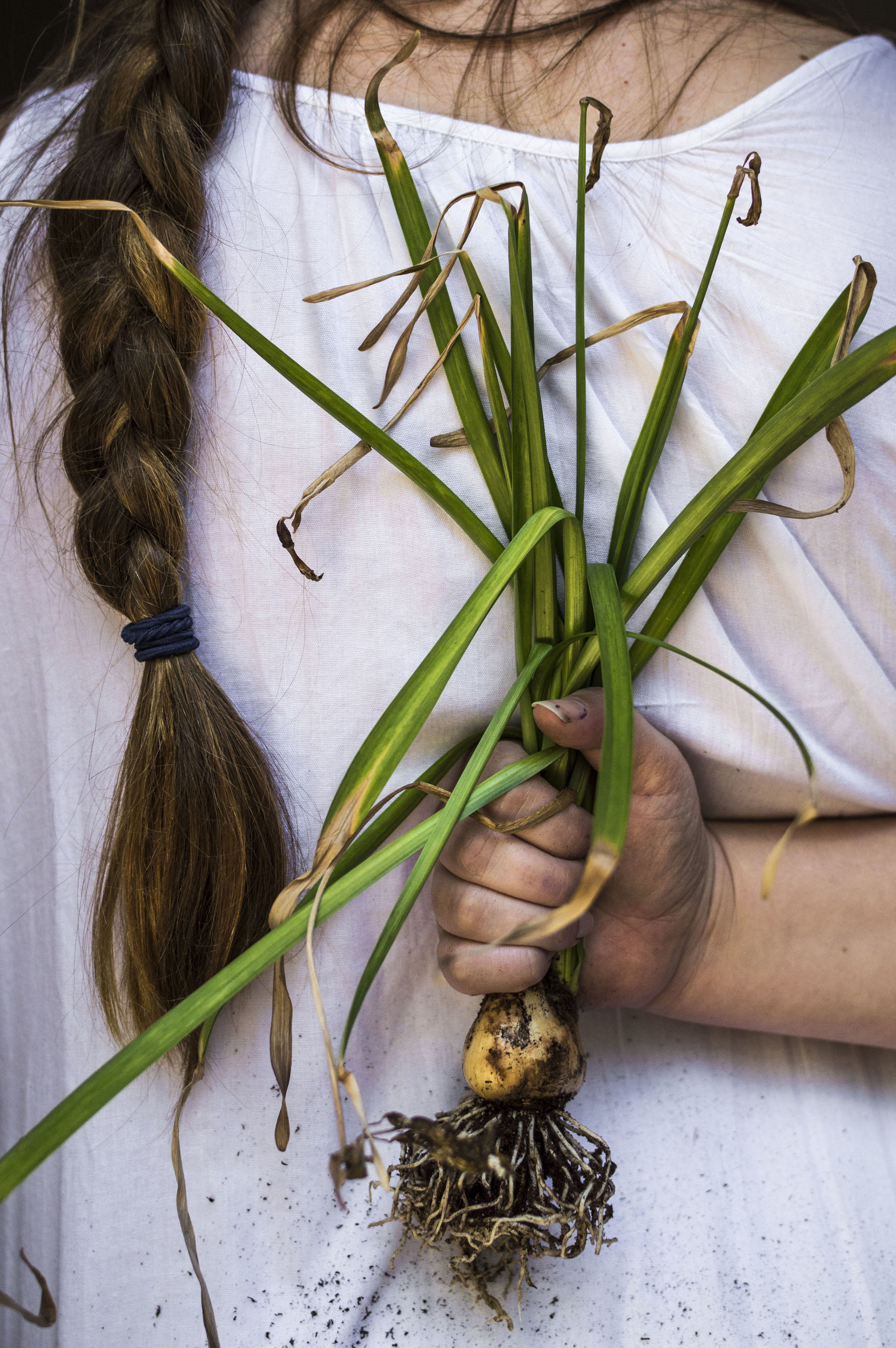 A Gardener's Guide to Planting Roots