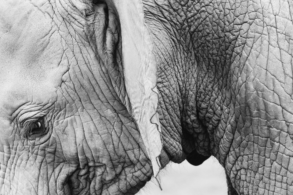 We love you elephants, but we don't want your skin (thanks)