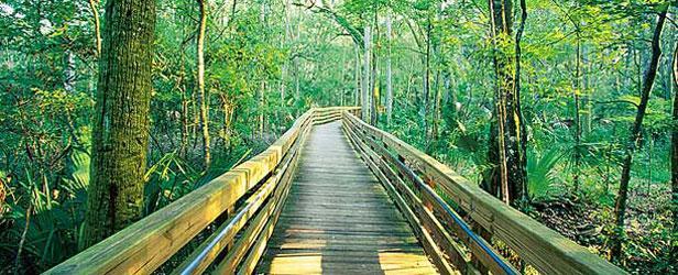 Apalachicola_National_Forest.jpg