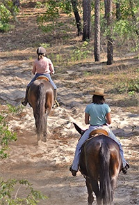 WSF_croom_horses.jpg