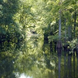 green-swamp-west-photo-4.jpg