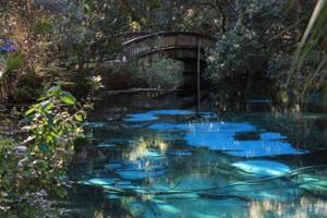 Juniper-Springs-Florida-1.jpg