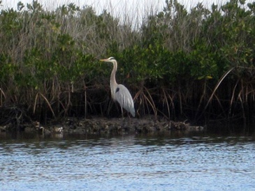 wildlife_in_Ozello_conservation_area.jpg