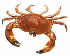 Stone_Crab.jpg
