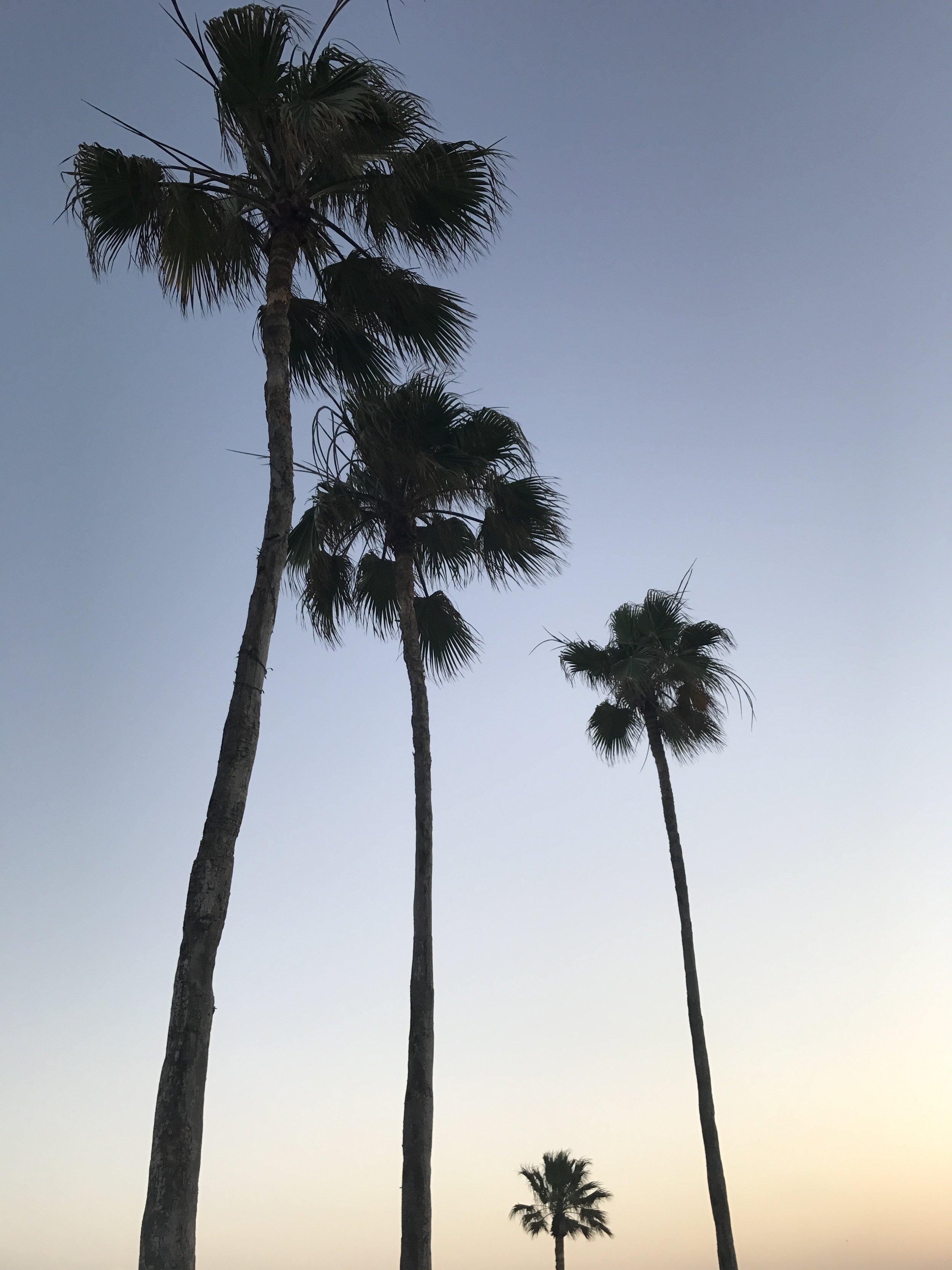 Sunset while walking on Laguna Blvd.
