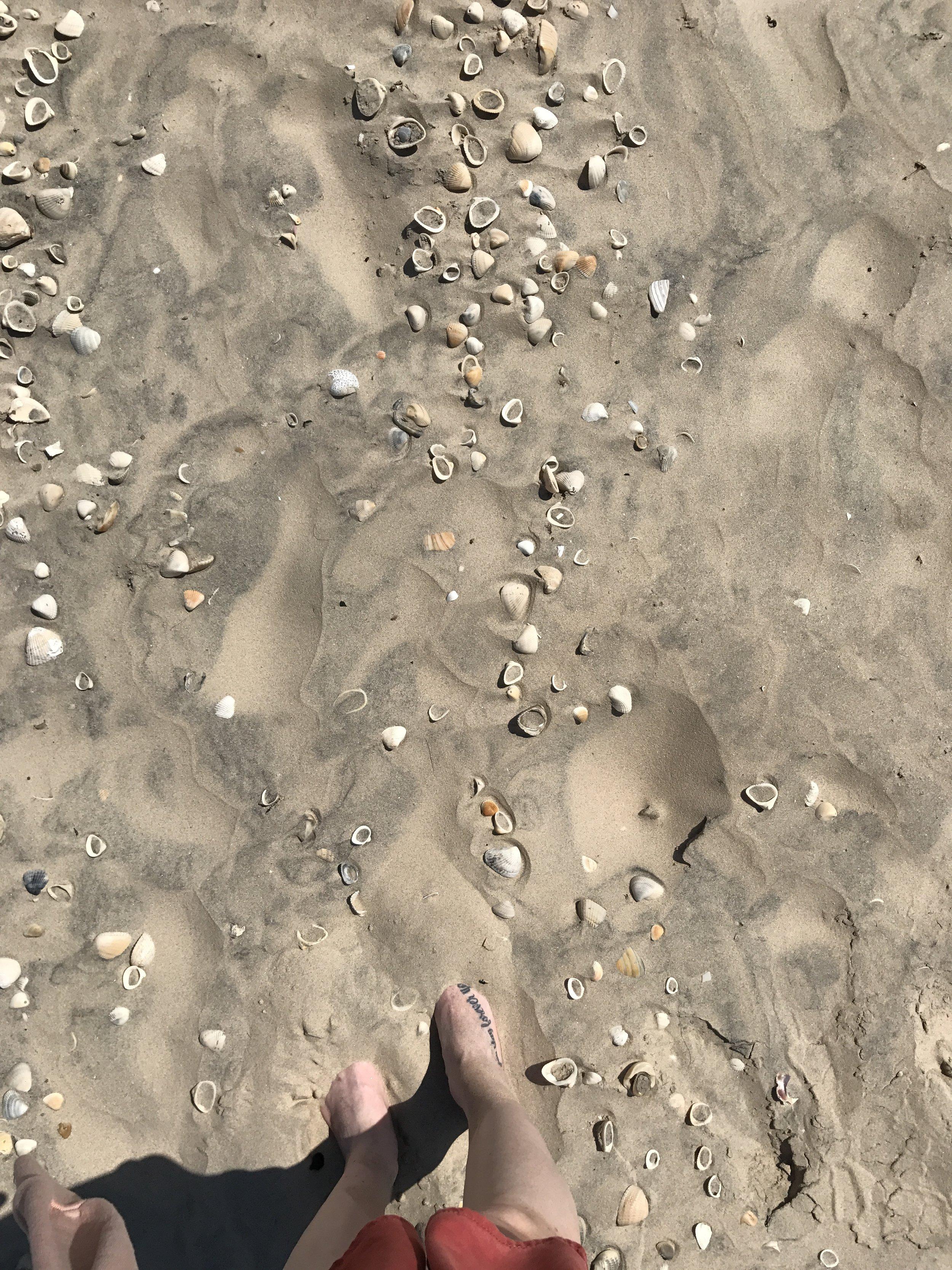 So many shells!