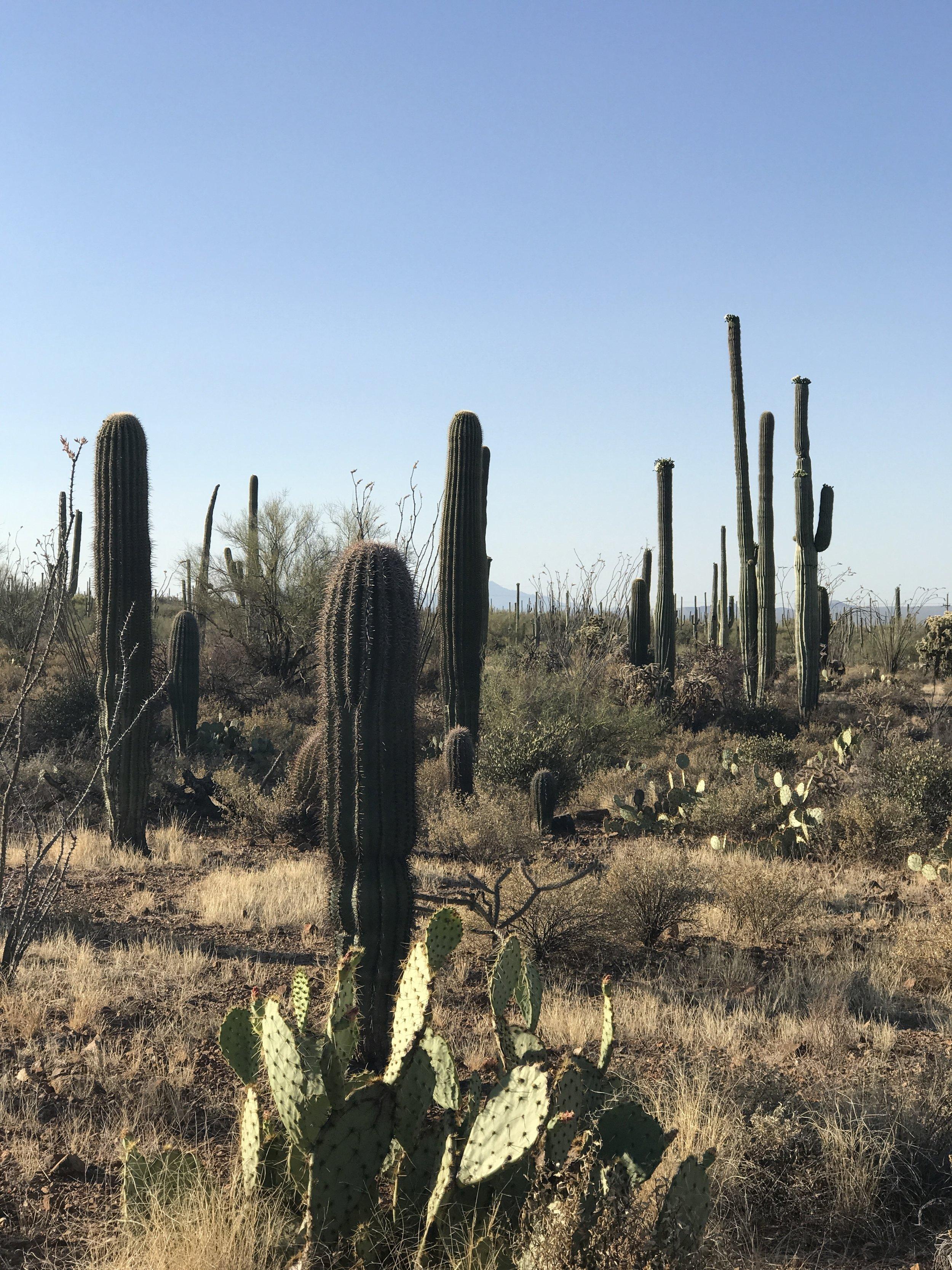 Cactus cont.