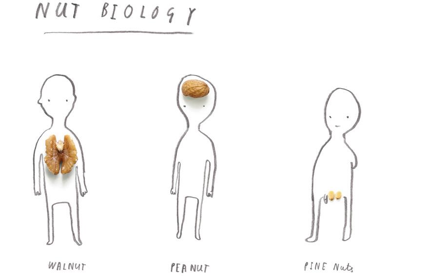nut_biology_web-3-1.jpeg