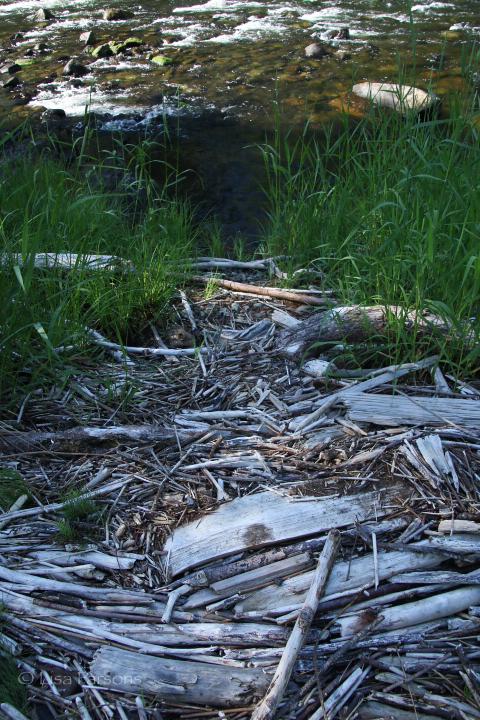 River Drift
