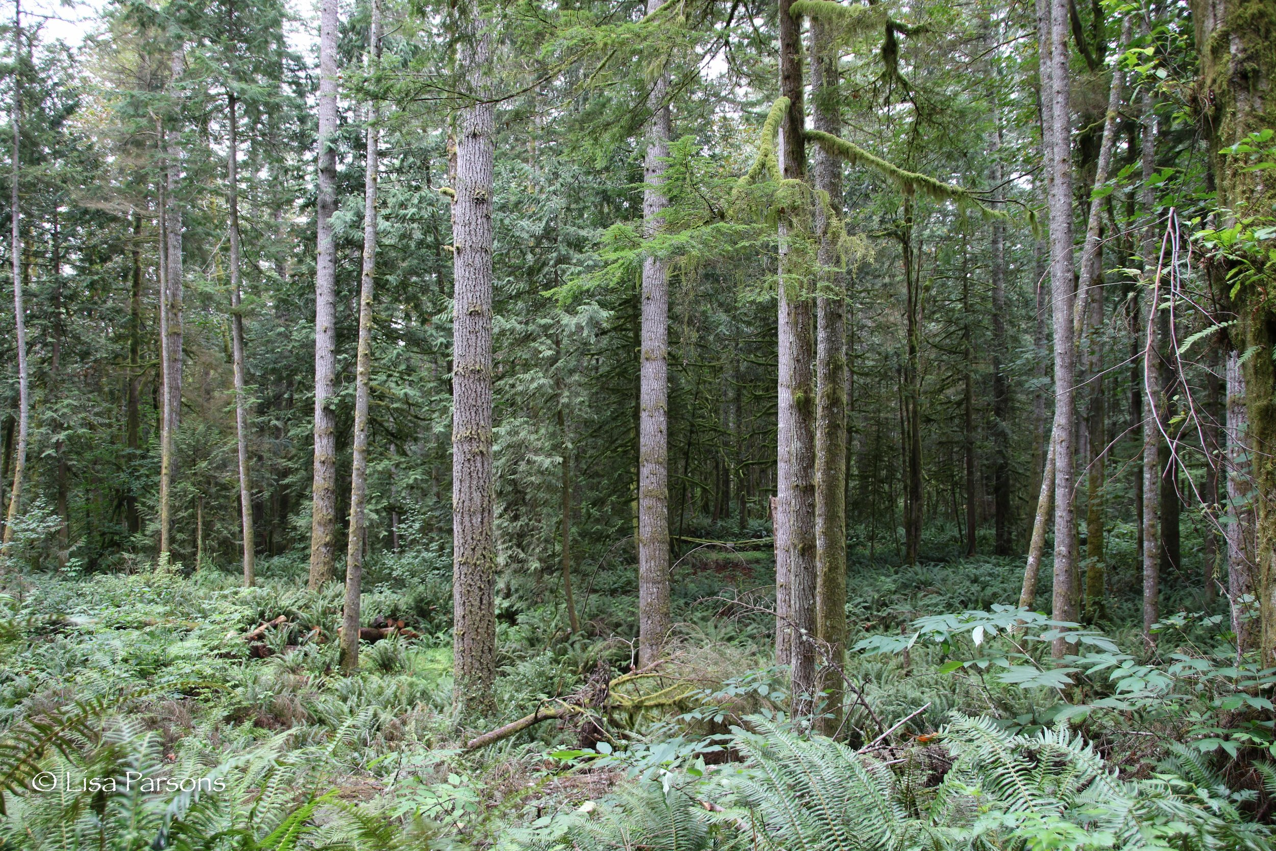Mature Forest