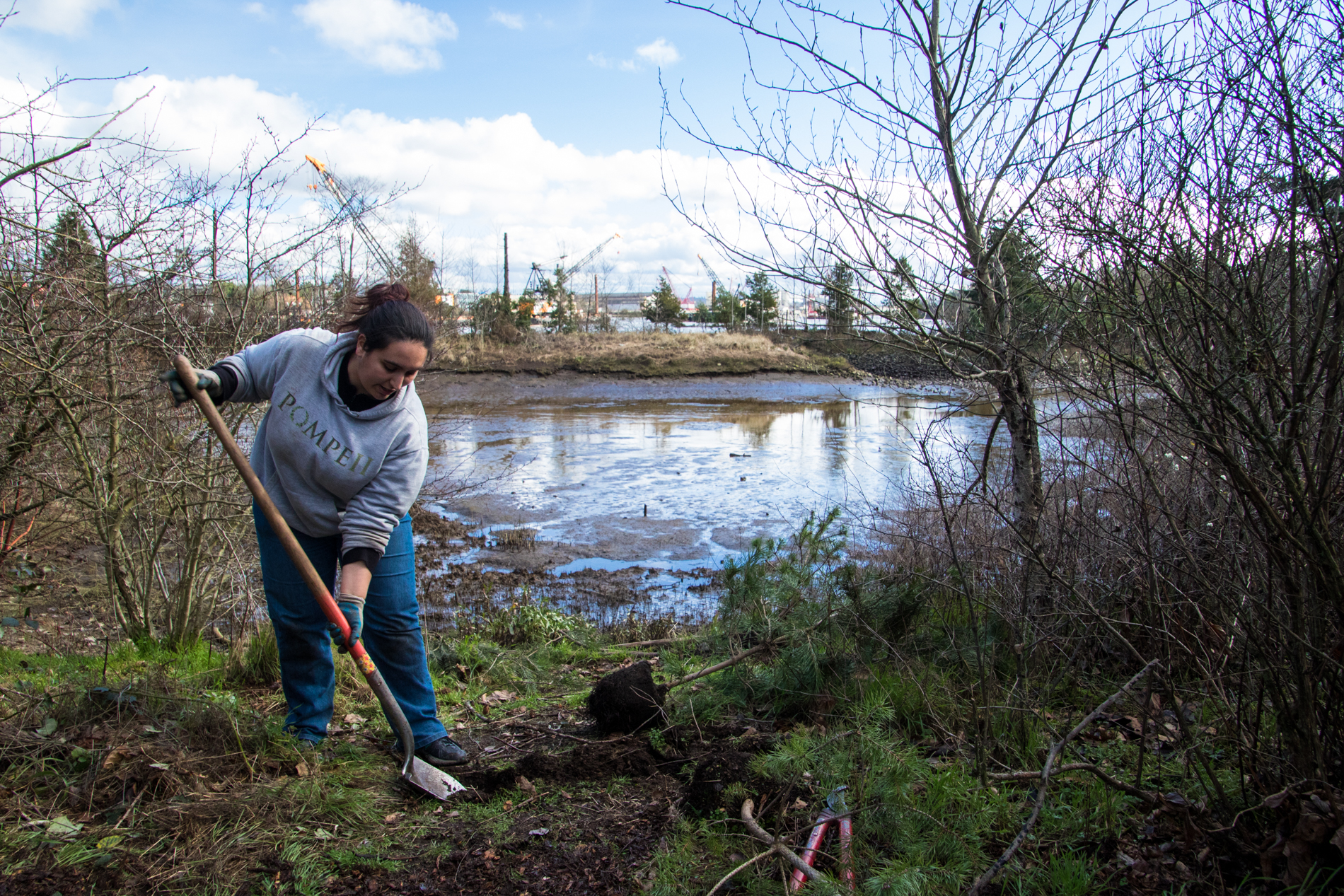 Planting trees along the Duwamish River at Herrings House Park