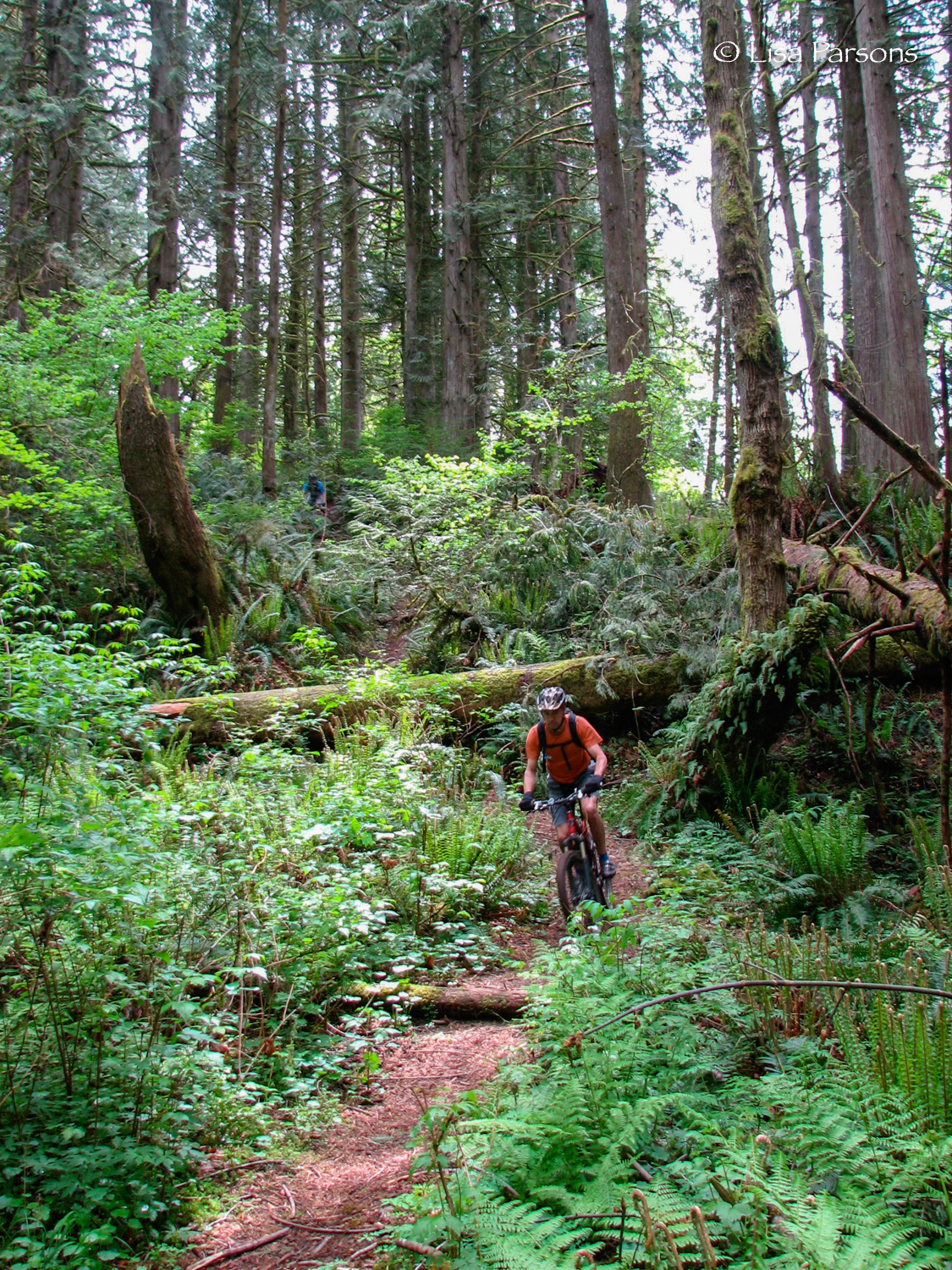 Mountain biker navigating the steeper lower section of trail.
