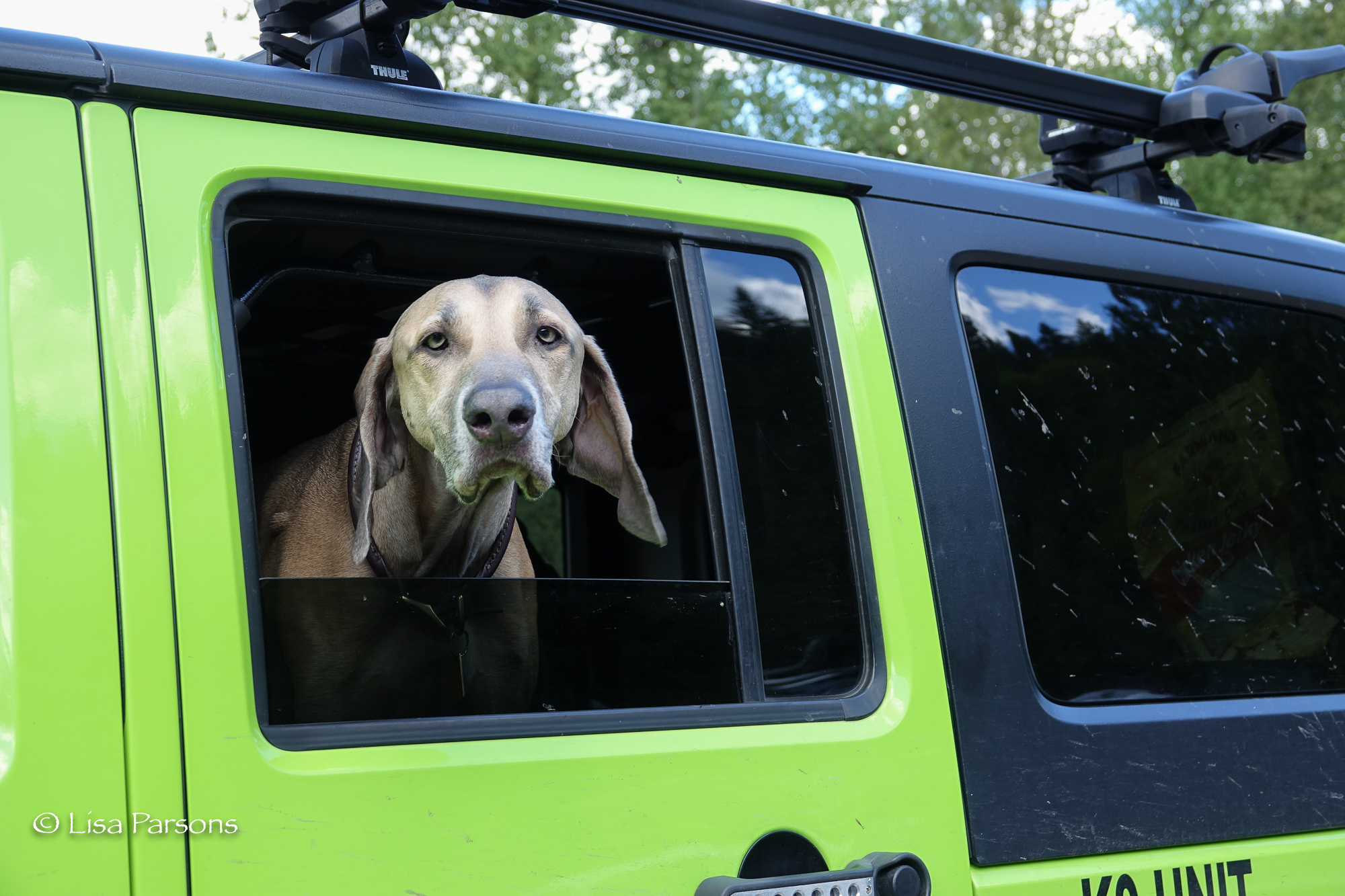 Even dogs love the Green River Gorge