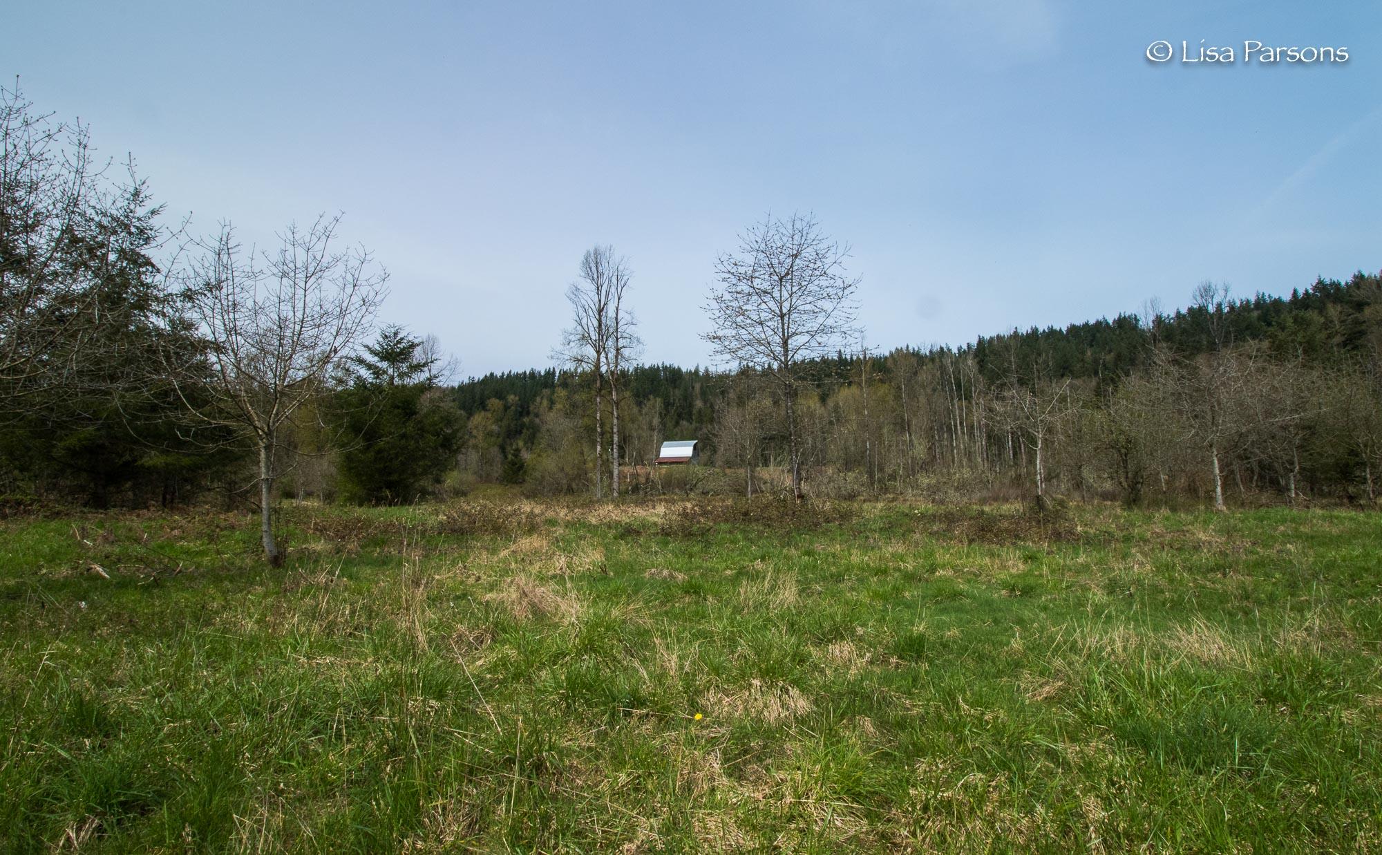 Open Meadow Area