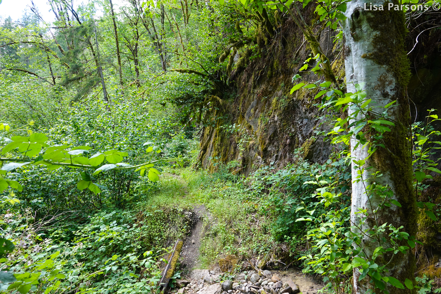 Trail Down to the River