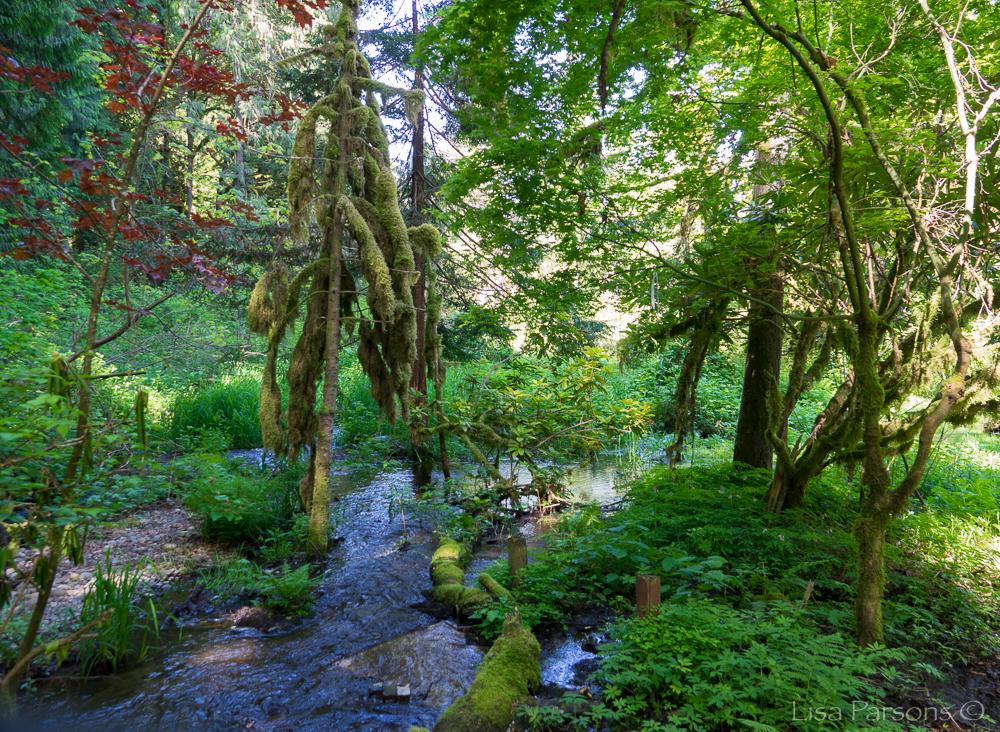 Spring at Jenkins Creek