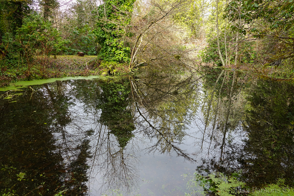 Pond & Habitat for Wildlife