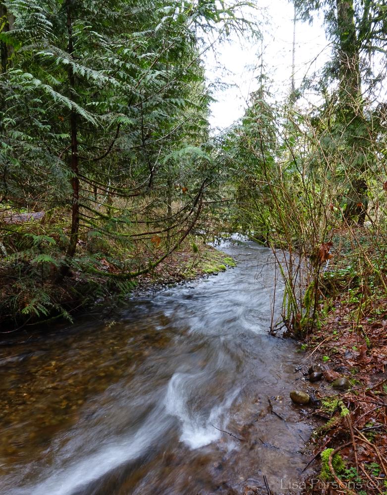 Jenkins Creek Flowing Through Lower Park