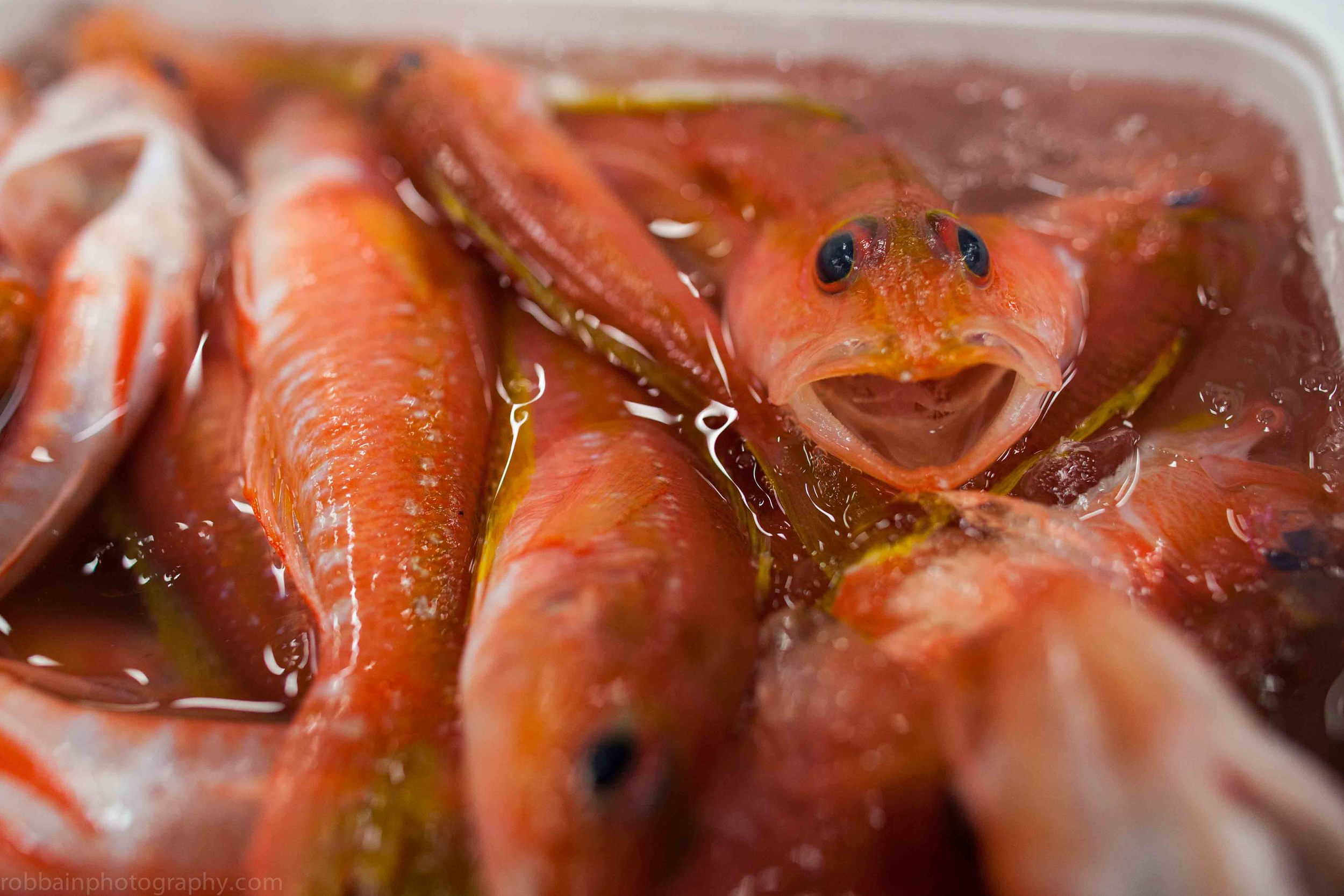Photo 5. Box orange fish close up.jpg