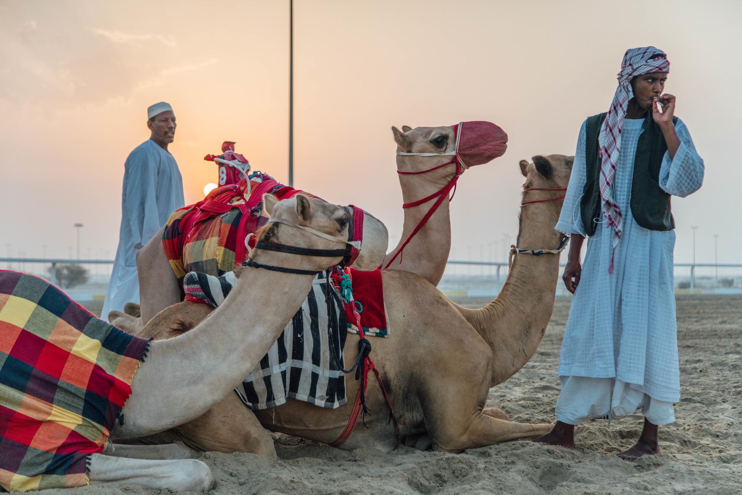 Camel Robots by Fraser Morton17.jpg