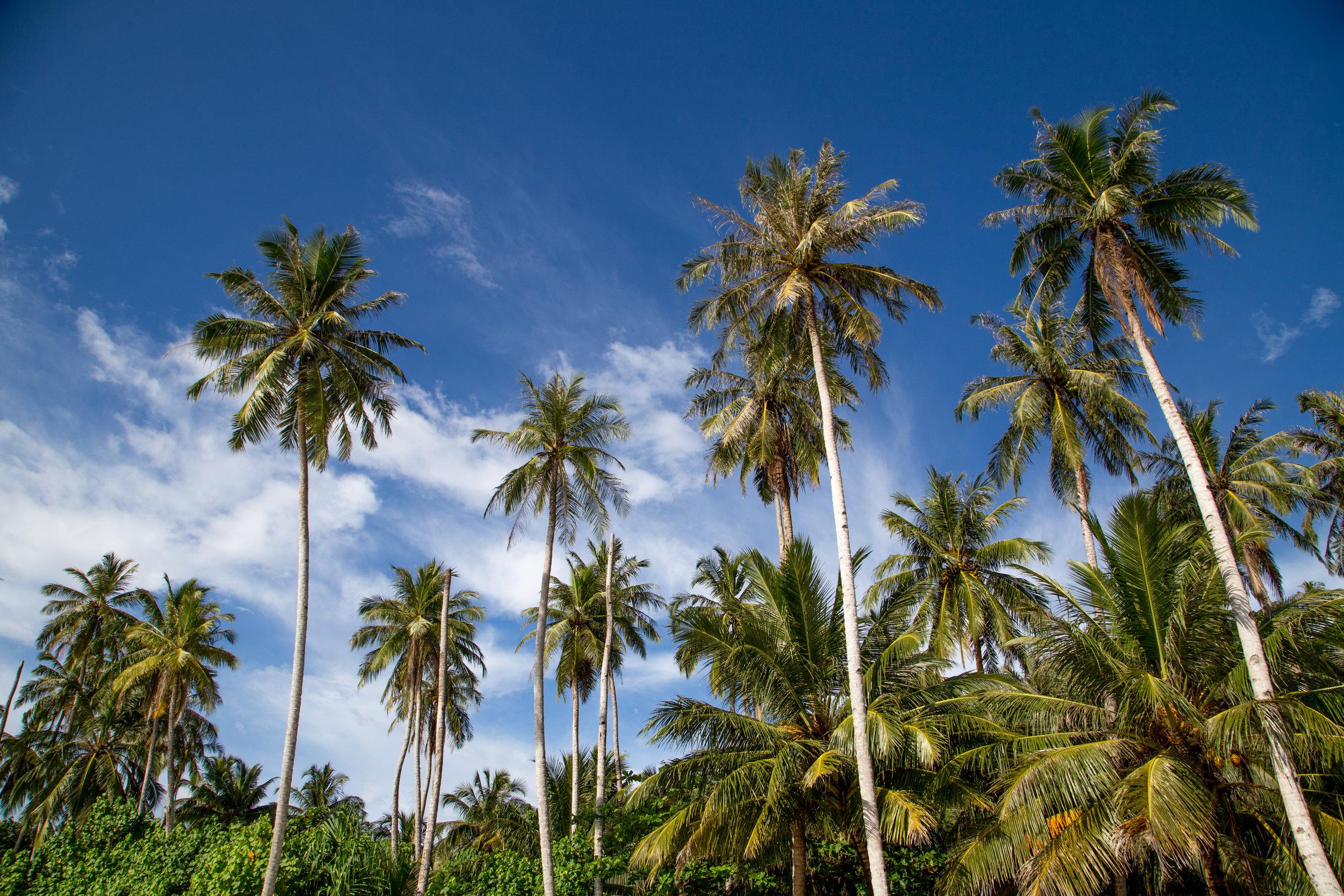 The Mentawais by Far Features
