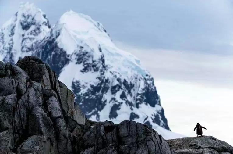 Antarctica small copyright Fraser Morton