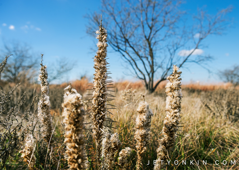 Arbor Hills Nature Preserve, Plano, TX