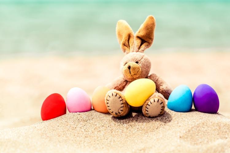 SF Bunny on Beach pic.jpg