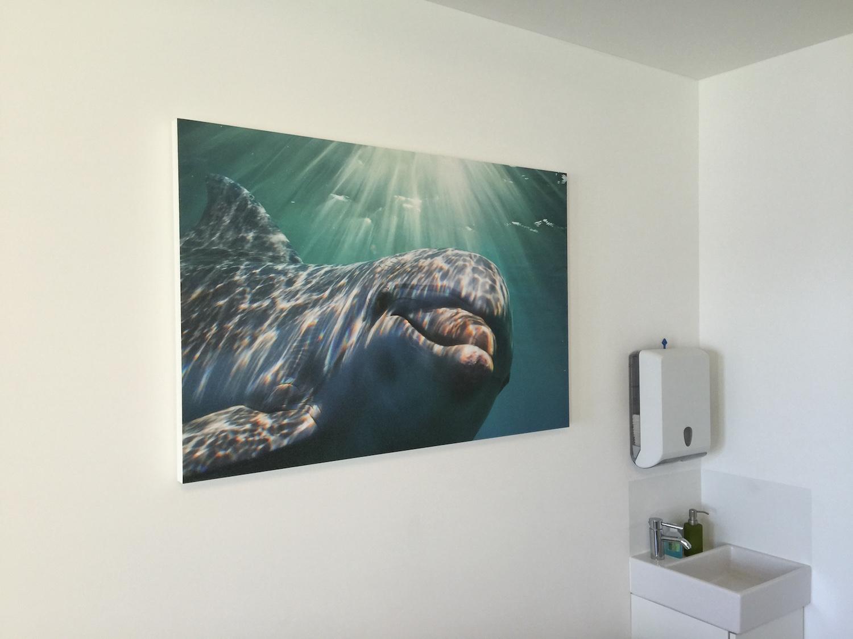 Kopie von Akustikbilder mit Fischmotiven - Kinderarztpraxis Nautilus, Thalwil