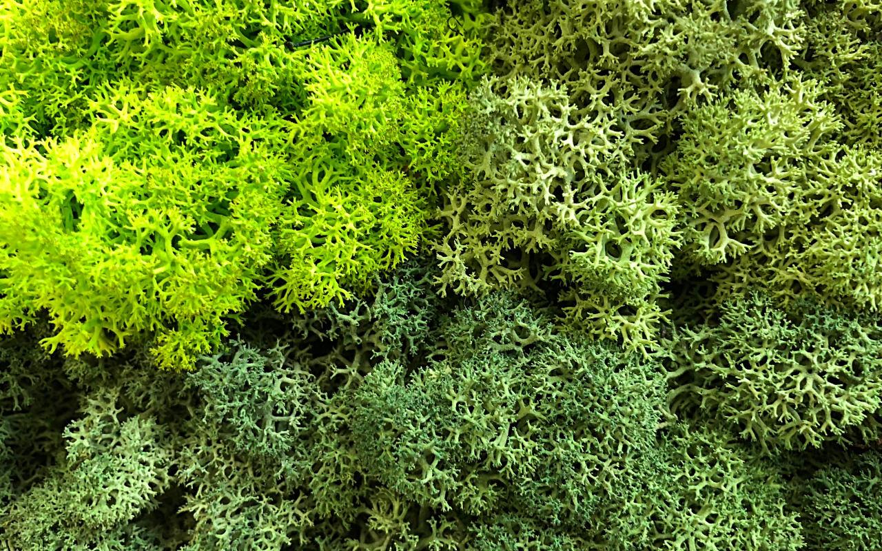 Nodgröna Farben 3.jpg
