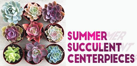 Succulentheader.jpg