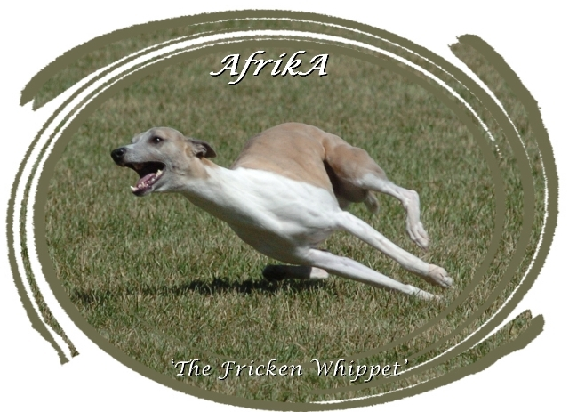This is a picture of AfrikA running the first time after breaking his elbow.  He was a happy dog that day.