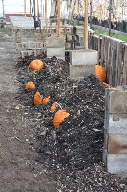 compost_urban_farm.jpg