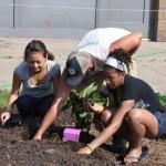 School_Gardeners_Minnesota