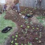 SaladBowlGardenPlanting
